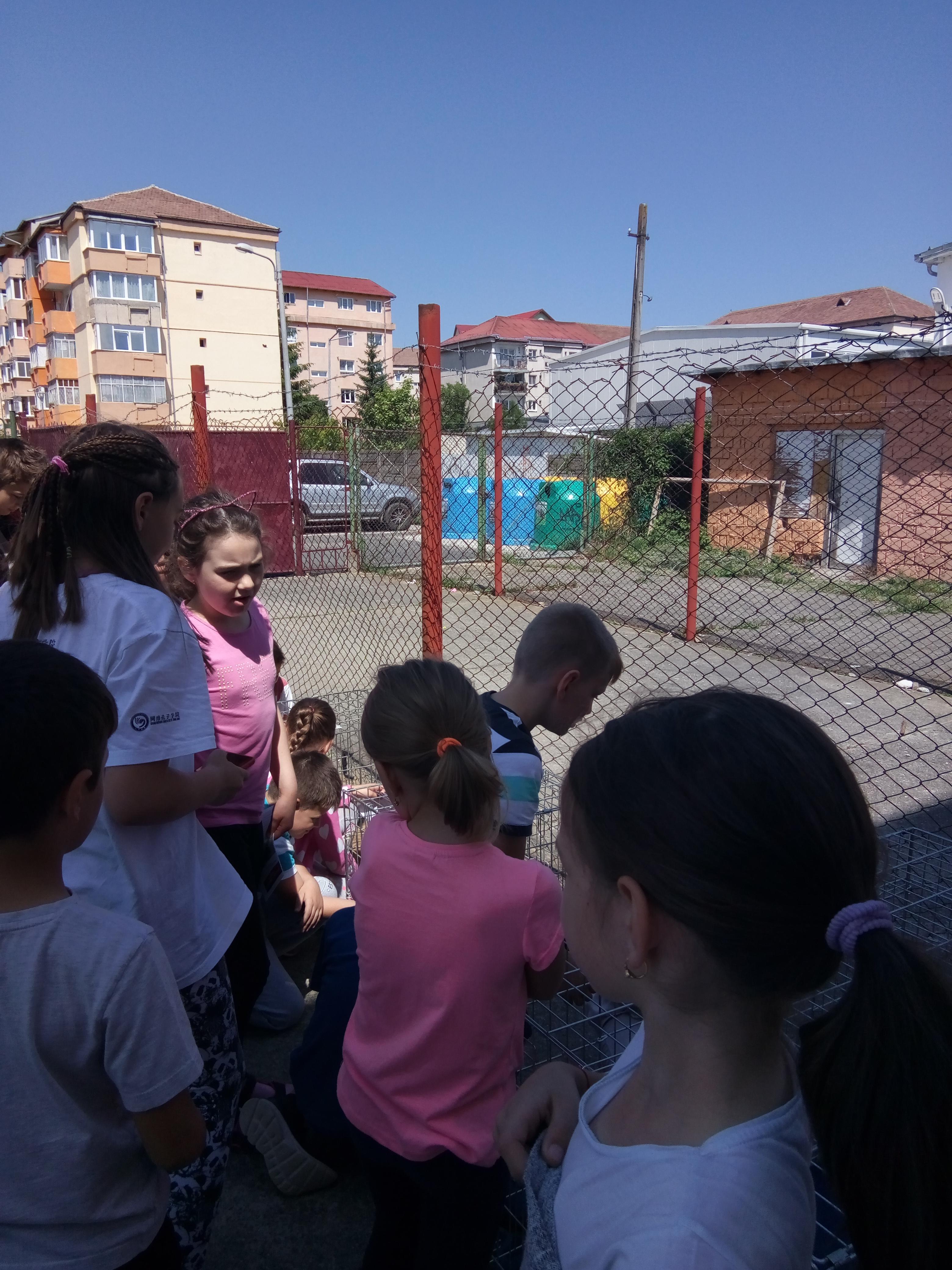 25.05.2018 - Scoala Nr, 25 Sibiu